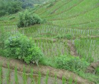 Sapa Village Package - 2 Day 3 Night